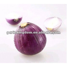 New Crop Red Shallot