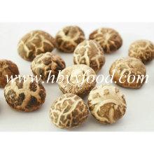 2-2.5cm Organic Green Dried Tea Flower Mushroom