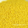 Good Quality Protein-Rich Yellow Hulled Millet