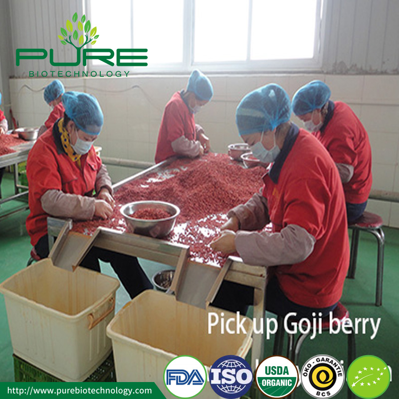 Pick up goji berry