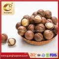 Delicous Healthy Pecan in Shell New Crop