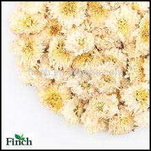 Crisantemo secada té herbario natural de la flor de la materia prima de la montaña amarilla
