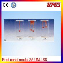 Root Dental Canal Modell für einfache Wurzel