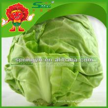 Col verde para la venta / col fresco grado A