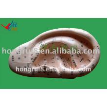 HR-514A modelo de massagem de orelha vívida modelo12cm, modelo de orelha