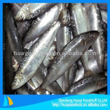 high quality new landing sardine wholesale sardines