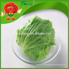 Lechuga fresca verde
