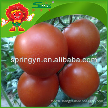 Tasty tomatoes with good price, Yunnan fresh vegetables exporter