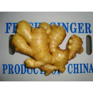 New Crop Fresh Ginger für die USA