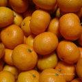 Exporter la norme de qualité de bébé frais Mandarin