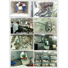 Production de filet de loup de mer