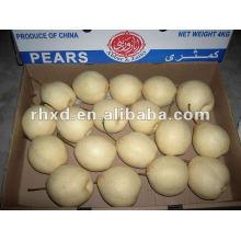 свежие груши оптом купить 2012 Новый