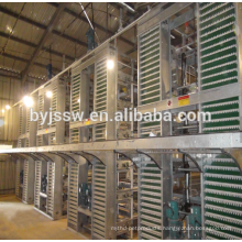 Turkey Project For Poultry Farm Equipment Design Chicken
