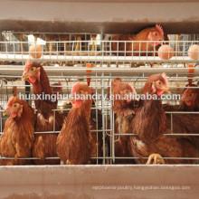 Algeria chicken cage for chicken farm