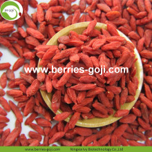 Grossiste Nutrition douce Pesticide faible Goji Berry