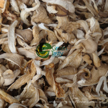 Heißer Verkauf Bio Baby Austernpilz
