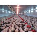 Equipamento Agrícola Automático em Casa de Aves com Design Econômico