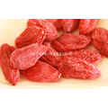Organic Goji Berry Dried Berry