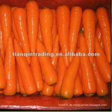 Karotte zum Verkauf
