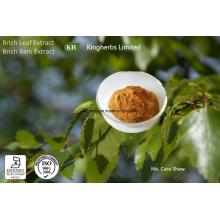 Extrato de folha de vidoeiro Flavonoides 5% Byuv
