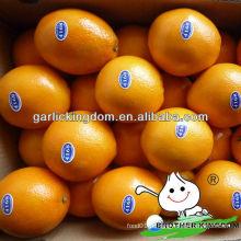 Nova safra fresco umbigo laranja de origem