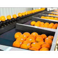 2021 New Crop Fresh Citrus Navel Orange From China For Wholesale