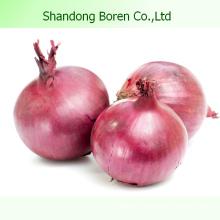 2015 Légumes chinois Oignon rouge frais