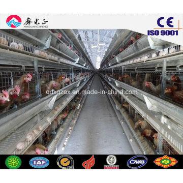 Сборные стальные конструкции для птичьего дома, Куриный дом с оборудованием (JW-16206)