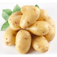 200g and up Fresh Potato