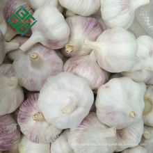 China Knoblauch Preise