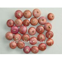 Productor de Chino Fresh Red Onion