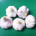 White Organic Garlics Wholesale