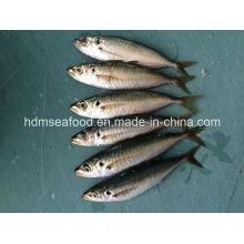 Замороженная рыба из скумбрии