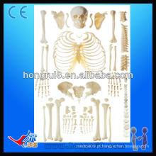 Esqueleto desordenado ISO com esqueleto adulto crânio
