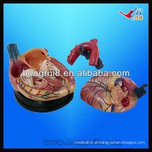 Modelo ISO Modelo novo Anatomia do Coração Jumbo, modelo de coração de plástico