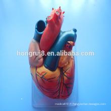 VENTE CHAUDE Anatomie humaine Modèle médical cardiaque, modèle de coeur en plastique
