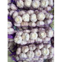 5.5cm-6.0cm Fresh Red Garlic