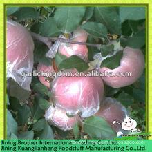 plastic bagged apple fuji