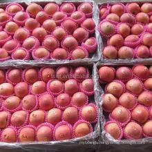 fuji price shandong fuji apples yantai fuji