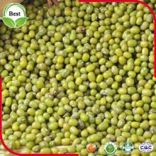 Feijões Mung verdes não-GMO secos da China