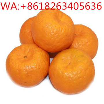 Indonesia Filipinas Ponkom Orange