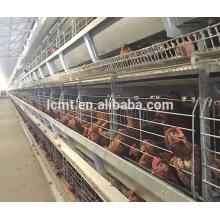Projeto moderno da exploração agrícola de galinha para o equipamento automático das aves domésticas