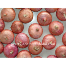 Supply cheap chinese Fresh Red Onion