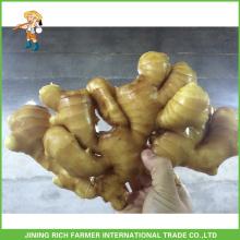 Gute Qualität Chinesischer frischer Ingwer