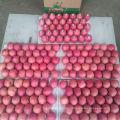 Highland Fresh Fuji Apple
