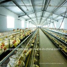 Equipamentos automáticos de avicultura para frangos de corte e camadas