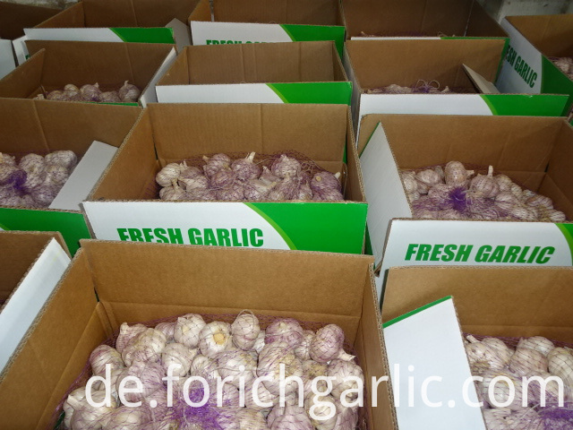 New Fresh Garlic Price