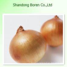 (HOT) Fresh Onions/ Fresh Yellow Onions, Hot! Hot! Hot!