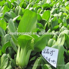 MPK01 Qingeng Mitte früh hochwertige Pakchoi Samen F1 Hybrid