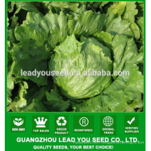 NLT05 Shengcai iceberg lettuce seeds all kinds of vegetable seeds